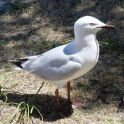 Bird promote