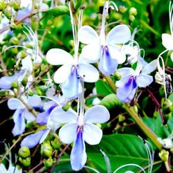 Flowers promote