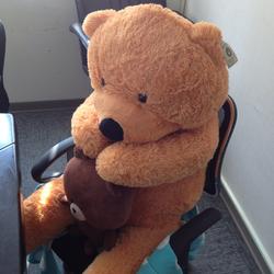 Bear promote