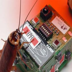 Roach01 550x366 promote