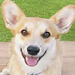 Doggie head promote