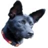 Alger Lin的 gravatar icon
